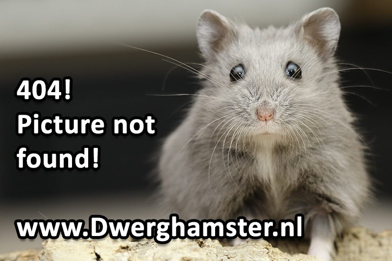 Syrische hamster tong